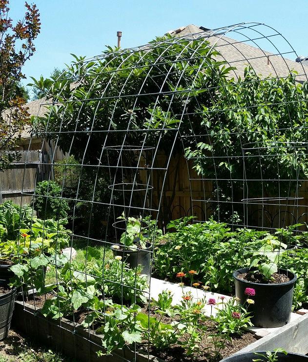 Spring 2020 Garden
